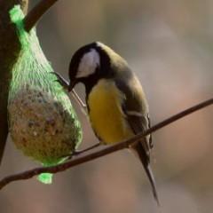 Tel de vogels in je tuin (VIDEO)